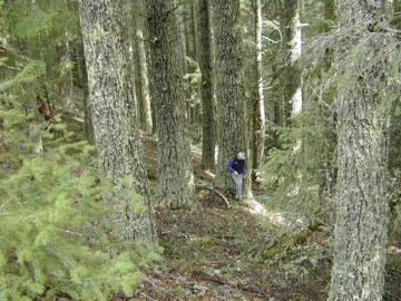 SLS Partnering with Michigan's Green Timber Consulting Foresters, Inc.