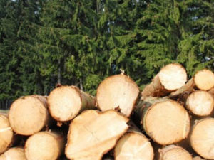 Lake States Timber Market and Stumpage Snapshot