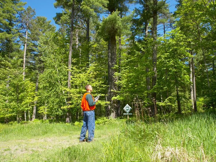 Forestland Management Projects