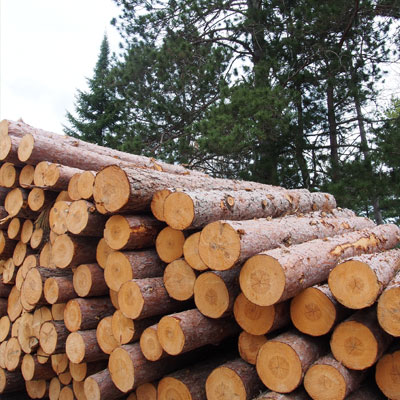 Wisconsin's Changing Forest Industry