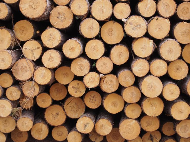 Some Wisconsin Loggers Holding Off On Timber Harvests