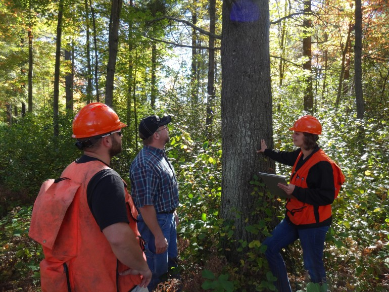 Highlights of Wisconsin's Current Managed Forest Law